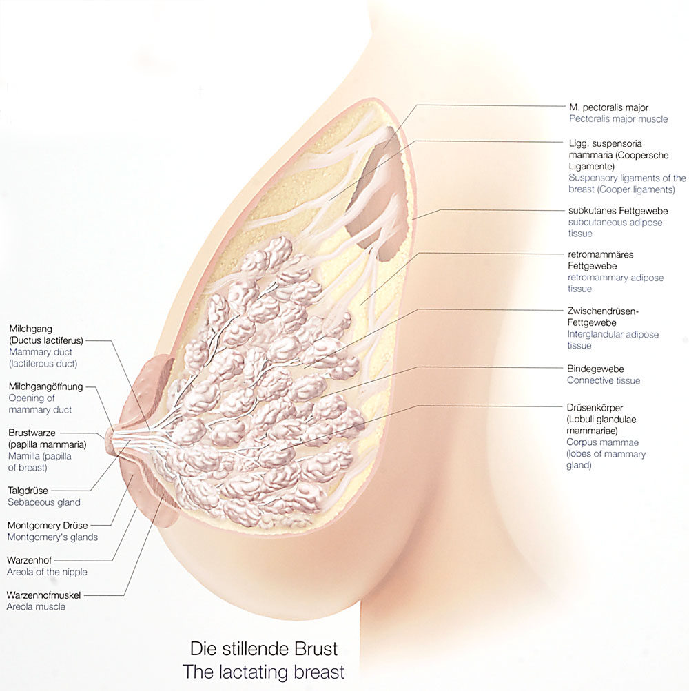 Die Erhöhung der Brust ispanija